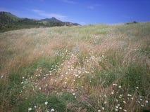 Flores en el campo Fotos de archivo