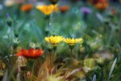 Flores en el campo Imagenes de archivo