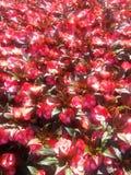 Flores en el campo Zdjęcie Stock