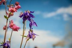 Flores en el cielo Imágenes de archivo libres de regalías