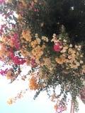Flores en el cielo Fotos de archivo