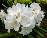 Flores en el complejo Sanzen-en del templo imagenes de archivo