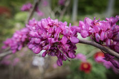 Flores en el complejo Sanzen-en del templo fotografía de archivo