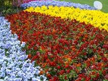 Flores en el en del  del ri KÅ del  de ÅŒdÅ Fotos de archivo libres de regalías