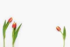 Flores en el fondo blanco Fotografía de archivo libre de regalías