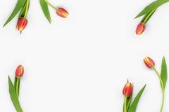 Flores en el fondo blanco Imagen de archivo libre de regalías