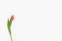 Flores en el fondo blanco Imágenes de archivo libres de regalías