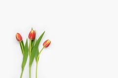 Flores en el fondo blanco Imagen de archivo