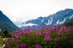 Flores en el fondo de montañas. Foto de archivo