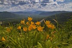 Flores en el fondo del paisaje de la montaña Imagenes de archivo