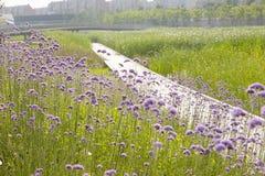 Flores en el frente del camino de madera Fotos de archivo