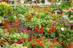 Flores en el invernadero Imagen de archivo