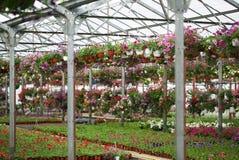 Flores en el invernadero Imagen de archivo libre de regalías