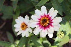 Flores en el invernadero de Finlandia Fotografía de archivo