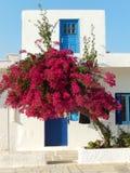 Flores en el IOS Foto de archivo libre de regalías