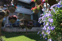 Flores en el jardín Fotos de archivo libres de regalías