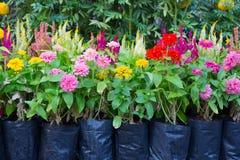Flores en el jardín Imagenes de archivo