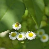 Flores en el jardín Imagen de archivo libre de regalías