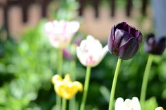 Flores en el jardín Fotografía de archivo libre de regalías