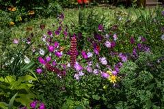 Flores en el jardín Fotografía de archivo
