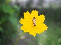 Flores en el jardín Imágenes de archivo libres de regalías
