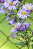 Flores en el jardín aislado en el fondo verde Fotos de archivo