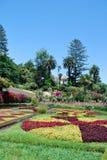 Flores en el jardín botánico del tbe de Funchal Foto de archivo libre de regalías