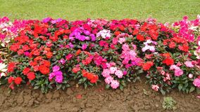 Flores en el jardín almacen de metraje de vídeo