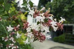 Flores en el jardín del chalet de Anton Chekhov en Gurzuf Imagen de archivo libre de regalías