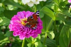 Flores en el jardín del verano imagen de archivo