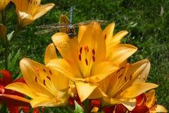 Flores en el jardín del verano imagenes de archivo