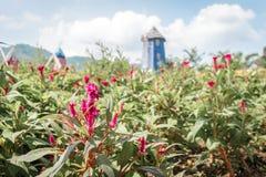 Flores en el jardín en un día Fotos de archivo