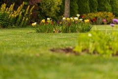 Flores en el jardín II Imagen de archivo libre de regalías