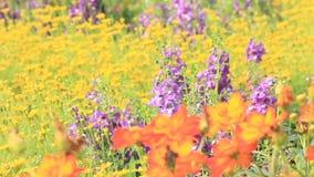 Flores en el jardín, vdo de HD almacen de metraje de vídeo