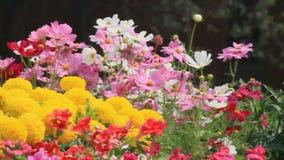 Flores en el jardín, vdo de HD metrajes