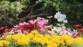 Flores en el jardín, vdo de HD almacen de video
