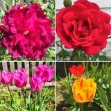 Flores en el jard?n fotos de archivo libres de regalías