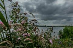 Flores en el lago Imagen de archivo libre de regalías