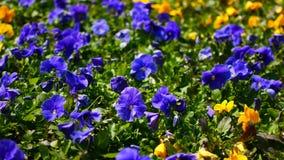 Flores en el macizo de flores en la ciudad Conveniente para las salvapantallas almacen de metraje de vídeo