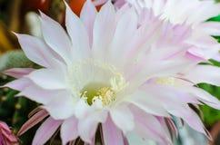Flores en el natura Fotografía de archivo libre de regalías