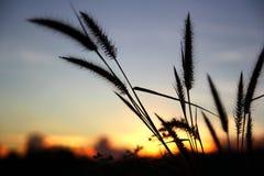 Flores en el nuevo día de la salida del sol A Fotografía de archivo libre de regalías