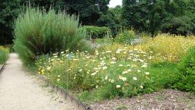 Flores en el parque imagenes de archivo