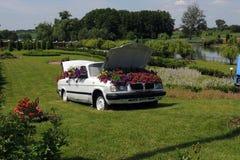 Flores en el parque Imagen de archivo
