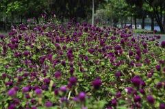 Flores en el parque Foto de archivo