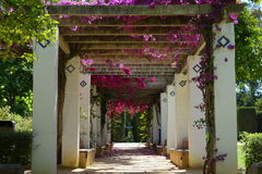 Flores en el parque Maria Luisa Park, Sevilla Foto de archivo libre de regalías