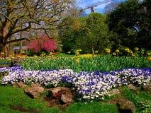 Flores en el parque zoológico de Amberes Fotos de archivo libres de regalías