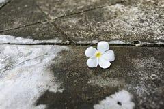 Flores en el piso Fotografía de archivo