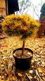 Flores en el pote fotos de archivo