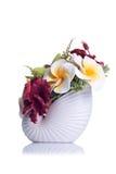 Flores en el pote blanco en fondo aislado con la reflexión Imagen de archivo libre de regalías