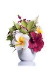 Flores en el pote blanco en fondo aislado con la reflexión Foto de archivo